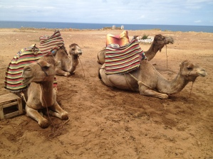 Camels by the ocean, Tangiers