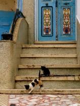 Street scene in the Medina, Tangiers