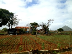 A farmer's house and fields south of Port Louis.