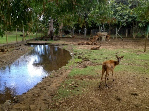 The deer enclosure at the Pamplemousses gardens.
