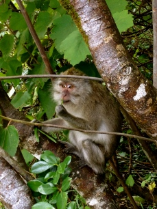 It was an amazing experience to come across this monkey in the wild in south of Mauritius.