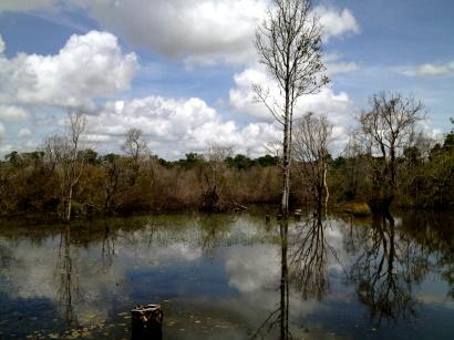 Wetlands around the ancient Neak Pean bathing pools.