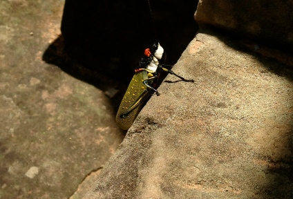 No magnifying glass required to see this colourful beauty, perched on the steps at one of the temple ruins. When it flew off, it had multiple layers of colourful wings.
