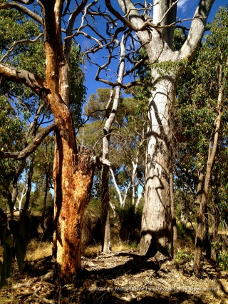 The Australian bush may not be as green as the forests in other countries, but there's no shortage of colour, or beauty.