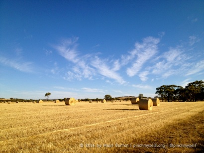 The sun is shining and the farmers are making hay in WA, a lot of it destined to be compressed and exported to markets like Japan.