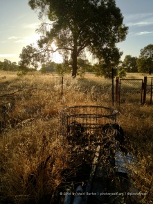This gallery has images taken in rural Western Australia over the Christmas period. Nothing says farm yard quite as strongly as a stack of old fencing wire and left over sheets of tin. Oh, and wild oats that bend in the breeze and shimmer in the setting sun. Mum tells me she's had someone in to whipper snipper the yard so that it's all neat and tidy for the start of the New Year, so I got this shot just in time!