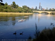 This was a pic of the swans and the bridge, which became a shot of the swans, rowers and bridge. All happening on the Yarra River this morning!