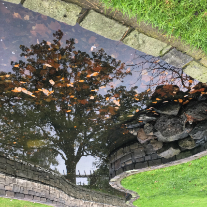 Tree reflected on a pond