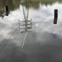 Electric pylon & wires reflected on the Yarra River