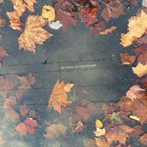 Autumn reflections in a puddle